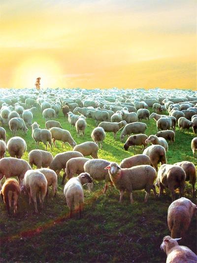 Liebe-Licht-Kreis Jesu Christi - Es werde ein Hirt und eine Herde